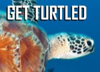 get-turtled-tile